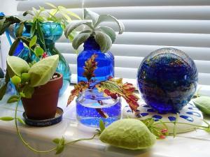 window-plant